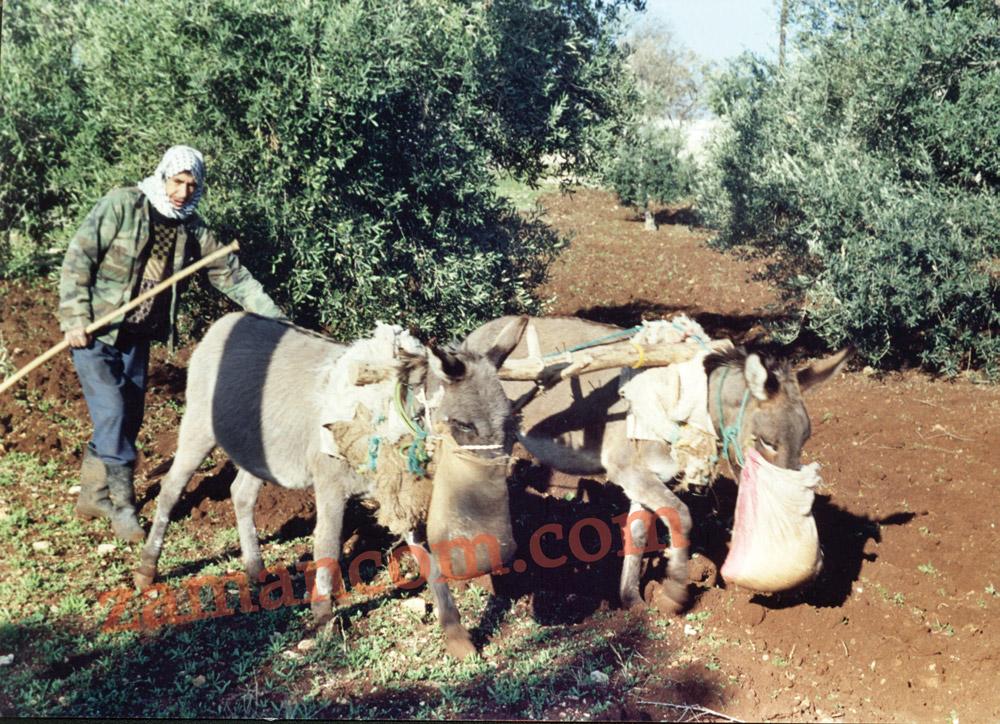 قَرَن حمارين (الصورة من قرى اربد)