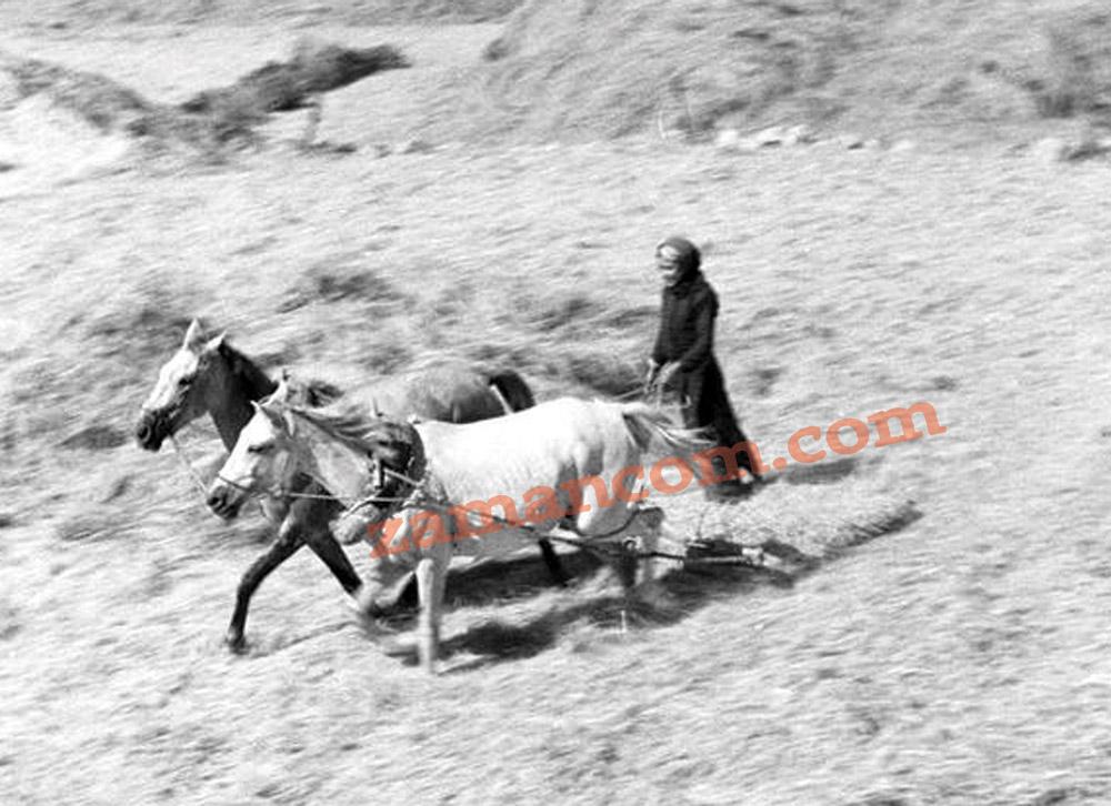 قرن زوج من الخيول (صورة قديمة من مناطق الكرك)