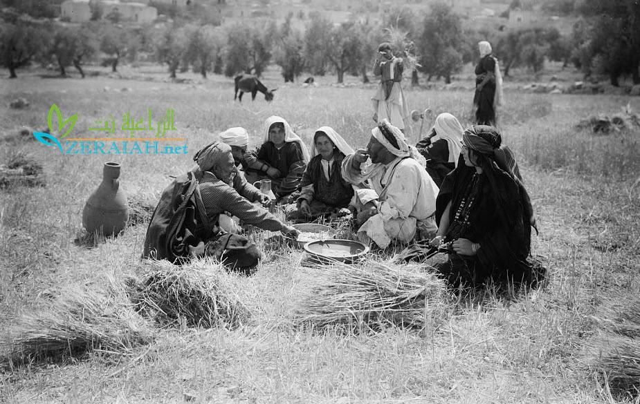 رجال ونساء في الحقل (الصورة من شمال فلسطين) عام 1938
